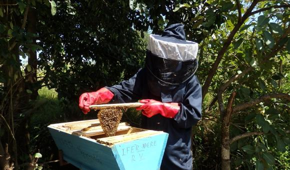 Ruche kényane du rucher pédagogique IFER-Marza - Région de l'Adamaoua (Cameroun)