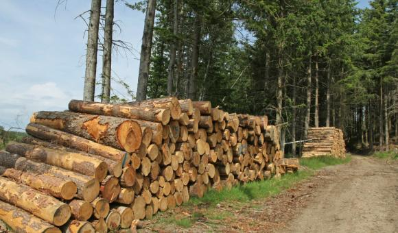 GNSS de haute précision pour la géolocalisation des stocks forestiers