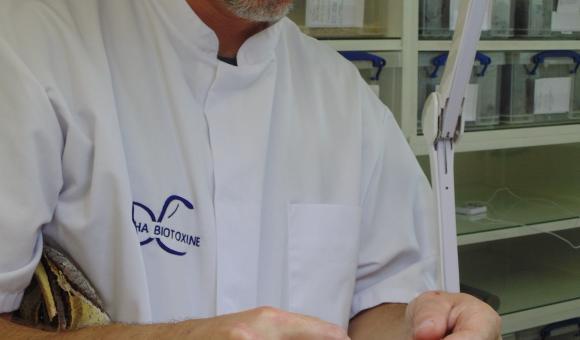 Dealing with scorpion (Heterometrus cyaneus) – Indonesia (c) C. Vanbellingen – Alphabiotoxine Laboratory