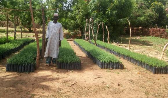 Amadou KIEMDE treen nursery at Gargaboulé (Pobé Mengao) en fin juin 2019