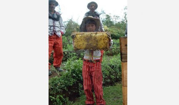 Au Guatemala, la coopérative Guayab regroupe des producteurs de miel