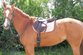 Une selle à cheval … thérapeutique