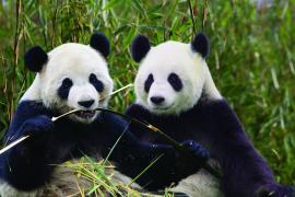 Hao Hao et Xing Hui