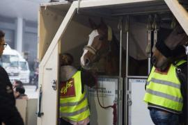 Liege Airport, d'où partent tous les chevaux européens, est partenaire du « Longines Hong Kong Masters ».